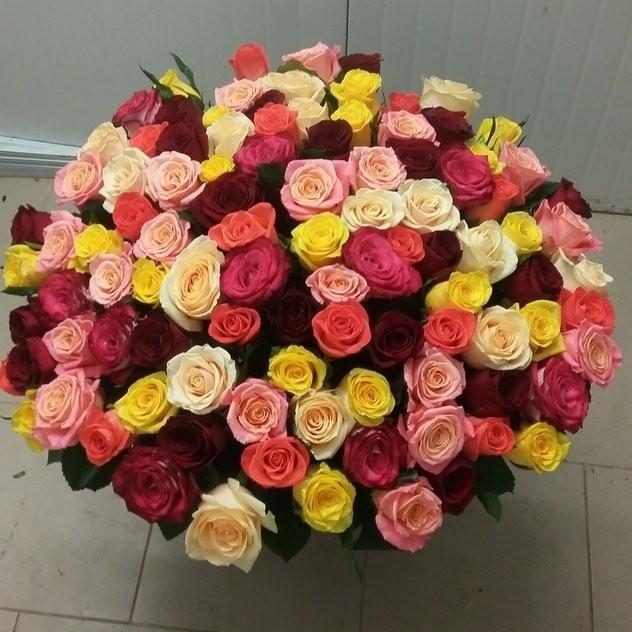 101 классическая роза-микс