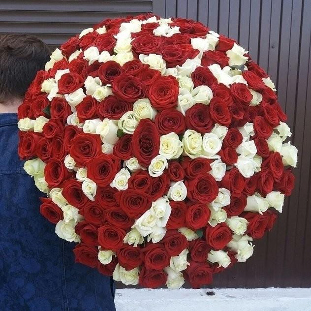 Охапка из 201 красно-белой розы